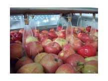 Яблочные чипсы AGRO-T